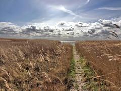 der Weg (Wunderlich, Olga) Tags: himmel wolken rügen insel mecklenburgvorpommern deu weg schilf reet landschaft natur naturaufnahme landschaftsbild