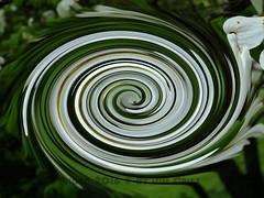 Twirl 27 (PhotosbyJim) Tags: twirl patterns
