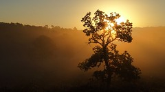 Golden Shimmer Tree (Daphne-8) Tags: tree baum arbre boom arbole sun sonne zon soleil sole sol gold oro goud light licht luz lumière luce rays beams rayons strahlen stralen ochtend morgen mañana morning leverdesoleil salidadelsol amanecer zonsopkomst sonnenaufgang sunrise nature naturaleza