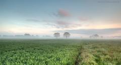 lispersteenweg (dirkvervoort) Tags: boechout antwerpen sunrise landschap landscape fog natuurpunt nature tree