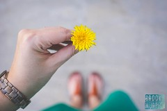 Week 15: Yellow (bmurphy502) Tags: 2017project52 yellow flower dandelion springtime spring colorful fromwhereistand plants fluer