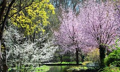 😄THE BEAUTY OF SPRING (caren (Thanks for 1.5 Mio+ views)) Tags: season'sbeauty smileonsaturday spring springtime printemps frühling frühlingsboten beauty deutschland germany flora landschaft landscape outside season pink white yellow munich münchen zoo tierpark