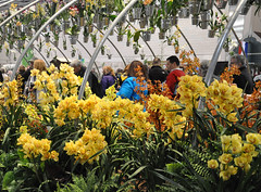 2017-03-11_0695n_waldor (lblanchard) Tags: 2017flowershow displaygarden waldor