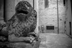 leoni di conversano (3zeguet) Tags: conversano bari leone lion chiesa porta bianco nero bw bn sculture criniera monocromo medioevale cittàantica statue felini