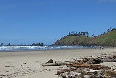 lunch is calling us (carolyn_in_oregon) Tags: crescentbeach cannonbeach pacificocean ecolastatepark coast alicia chiron