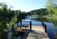 water levels_80719 (San Marcos Greenbelt Alliance) Tags: smgaphotobylancejones sanmarcosgreenbeltalliance springlakenaturalarea sinkcreek poetry