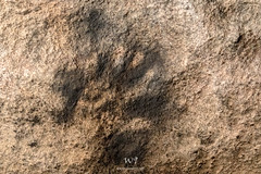 The Hand (W9JIM) Tags: w9jim rockart pictograph abdsp anzaborrego 5d4 24105l piedrasgrandes