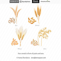 Four cereals in form of grains and ears (ksena_shu) Tags: illustration vector eps cereals healthyfood food oat rye design portfolio stock microstock wheat barley