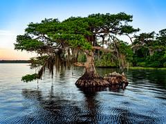 Joe Middleton's rest (Ed Rosack) Tags: cypress usa landscape tree nature water sky bluecypresslake centralflorida lake dawn ©edrosack florida verobeach