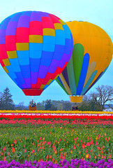 Tulip Balloons (Kirt Edblom) Tags: woodburn woodburnoregon oregon woodenshoefarms woodenshoetulipfestival tulipfestival tulips tulip milf wife gaylene balloon balloons hotairballoons field color purple green red yellow white blue bluesky pink landscape scenic serene festival flowers flower kirt kirtedblom edblom easyhdr hdr nikon nikond7100 nikkor18140mmf3556 bloom april 2017 easter willamettevalley clouds