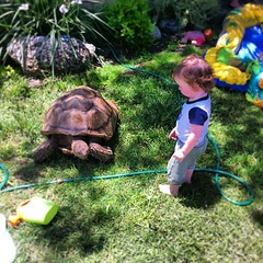 Baby Huxley saying HI to our green lawn mower Yortoise. #tortoise #turtle #sulcata #baby #sunday http://bit.ly/12n2vvt teod_arts photo on Instagram Teod Tomlinson Art (Teod Tomlinson) Tags: art birds painting toys gallery surreal pop oil expressionist raven hive tool impressionist juxtapoz the