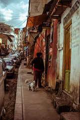 (victor.micoud) Tags: dog chien southamerica america streetphotography perros latina