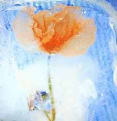 Flor (Manzzan) Tags: blue orange flower flor