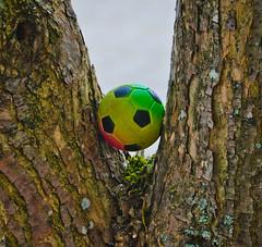 Tree's and ball's. (Omygodtom) Tags: summer tree sports nature nikon balls tamron tamron90mm d7000