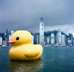 (Gregory Wu) Tags: film ic kodak w ikoflex hong kong pro rubberduck f35 75mm tessar