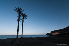 Playa de Veneguera (David Azurmendi) Tags: ocean travel david tree beach azul photography islands mar playa canarias palmeras palm viajes canary fotografia paraiso oceano veneguera azurmendi