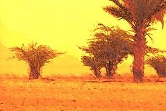 saudi sandstorm (zbigphotography (1M+ views)) Tags: trees sun hot landscape desert wind middleeast palm sandstorm heat land saudiarabia flickrsfinestimages1