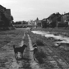 two (skip.to...) Tags: bridge 2 two blackandwhite dog reflection nature animals architecture river serbia paths srbija reka valjevo kolubara tesnjar kolubarskikej