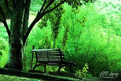 Verde que te quiero verde... (E.M.López) Tags: parque naturaleza verde andalucía banco paisaje agosto verano árbol jaén arboleda paraje álamo 2013 castillodelocubín