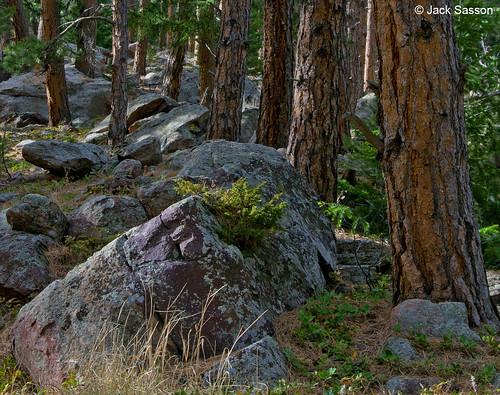 Photo - Trees and Rocks - Enchanted Mesa trail