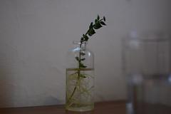 水 (noidcanuse2011) Tags: plant nature water 水 d7100