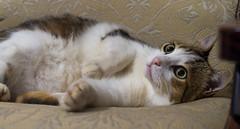IMGP1110 (fabiomarrasfoto77) Tags: gatto socrate