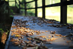 The leaves are falling. (HDH.Lucas) Tags: autumn fall nature leaves walk lucas cannon gaze