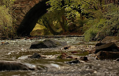 DSC03614.1 (pbauerphotographics) Tags: bridge fish eye water leaves rock stone river fishing berry level rush bushes slamon wwwpbauerphotographicscom