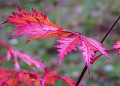 Japanse tuin (Hetty 51) Tags: thenetherlands denhaag thehague landgoedclingendael