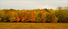 Boyer Road Color (joeldinda) Tags: autumn trees color fall raw michigan roxand mulliken joeldinda 1v1 alejandrohide