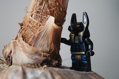 Lego Anubis - On The Oasis (Marco Hazard - Knight of Ren) Tags: jackal lego coconut pharaoh quest anubis
