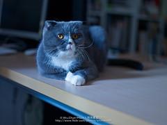 CF003881-E (archiwu945) Tags: zeiss cat hasselblad 寵物 carlzeiss p45 phaseone cfe2880mm digitalbacks