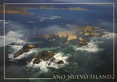 Postcards: Año Nuevo Island (ali eminov) Tags: postcards islands añonuevoisland parks californiaparks añonuevostatepark california