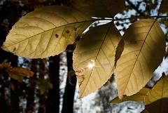 Sun (Igor Philippov) Tags: nature 35mm nikon fuji granny s5