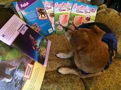 I'm so proud to be in this! (C Merry) Tags: nyc newyorkcity lowereastside nyny childrensbook bookfair stickerbook publicschool shelterdog rescuepets scholasticbooks deathrowdog adoptdontshop darafoster cutebookforkids pupstylestickerbook