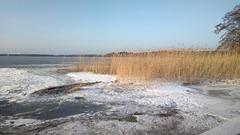 Tarvo island winter reeds (hugovk) Tags: cameraphone winter finland reeds island nokia helsinki february hvk talvi 2014 carlzeiss 808 southernfinland tarvo hugovk geo:country=finland camera:make=nokia pureview exif:flash=offdidnotfire exif:exposure=1100 exif:aperture=24 nokia808pureview exif:orientation=horizontalnormal camera:model=808pureview uudenmaanmaakunta geo:locality=helsinki geo:county=uudenmaanmaakunta geo:region=southernfinland exif:exposurebias=0 exif:focallength=80mm exif:isospeed=100 meta:exif=1393962441 tarvoislandwinterreeds