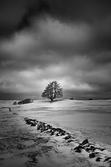 That tree (Sandra Herber) Tags: winter snow toronto ontario canada tree stonewall caledon