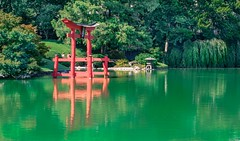 Lake-small-3596 (PBIN2351) Tags: lake newyork water brooklyn japanesegarden nikon 70300mm flowersplants brooklynbotanicgardens d700 patbianculli pbin2351 2012patbianculliallrightsreservedpleasedonotusewithoutpermission