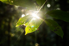 Sunburn (declan.burley) Tags: flowers light peru amazon jungle leafs