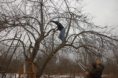 """Down Goes Another Branch <a style=""""margin-left:10px; font-size:0.8em;"""" href=""""http://www.flickr.com/photos/91915217@N00/13528565184/"""" target=""""_blank"""">@flickr</a>"""