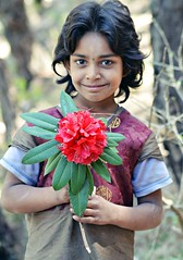 Rhododendron (Sougata2013) Tags: people india mountain flower nature girl face spring nikon expression hill rhododendron mandi hilltop himachalpradesh nikond3200 redrhododendron gallu himachali jogindernagar