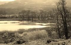 Wales Ynys-hir (A4ANGHARAD) Tags: wales fuji cymru fujifinepix rspb ynyshir s6500fd a4angharad macevans walesthreemac