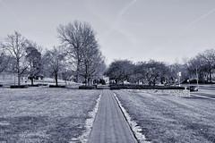 031817-902Fx (kzzzkc) Tags: nikon d7100 usa missouri kansascity nelsonatkins museumofart brick south walkway lawn tree cleaveriiblvd
