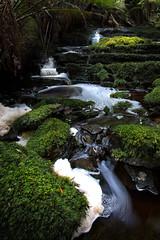 Warra Falls 2 (RoosterMan64) Tags: australia cradlecoast green landscape longexposure moss tarkine tasmania warrafalls water waterfall