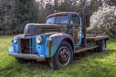 TLC Req'd (Paul Rioux) Tags: transportation vehicle truck old vintage abandoned forgotten decay decayed derelict blue rusting rusty rust rural farm country ford flatdeck blossoms prioux