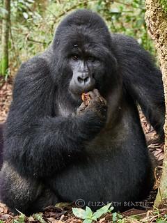 Uganda 30