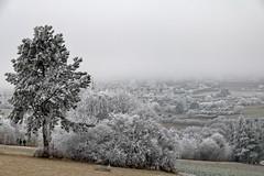 Paysage blanc (Lucille-bs) Tags: europe france bourgogne côtedor dijon combeàlaserpent paysage givre blanc arbre nature hiver neige brume