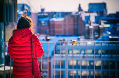 Small in proportion as to height, buildings and lady in red. The banana peel that is. (Maria Eklind) Tags: outdoor dof malmöhögskola fotosondag fotosöndag nature people roofgarden sweden fs170226 depthoffield garden banan bananskal small liten winter snow niagara red malmö skånelän sverige se