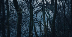 Where nightmares come from (Coisroux) Tags: fog ominous forboding theunknown nightmare scary riverbank treelines darkness embankment waterside reflections rivers water lucid imagination dreams d5500 nikond decay rural