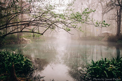 Ginnie Spring (J. Parker Natural Florida Photographer) Tags: ginniesprings ginniespring highsprings florida santaferiver outdoor landscape morning foggy water waterscape spring winter springhunters waterlillies ndfilter nd1000 neutraldensityfilter gilchristcounty swimming camping campground vsco vscofilm nature scenic naturalbeauty wild longexposure